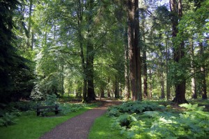 New Forest scene